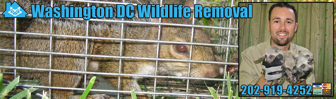 Washington DC Wildlife and Animal Removal